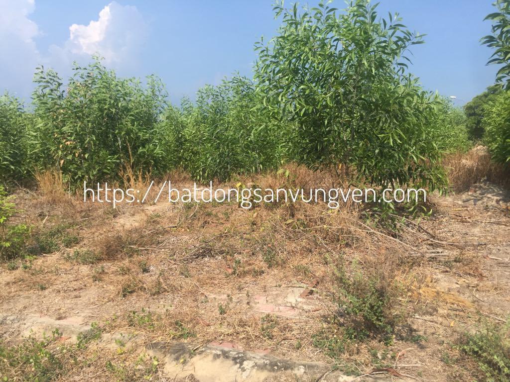 mua đất Nhơn Trạch Đồng Nai